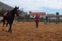 Addestramento del cavallo da impiegare per la Terapia